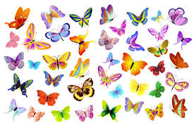 colorful butterfly vector graphic webbyarts