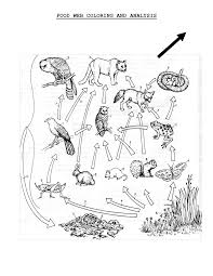 food web coloring pages sheets 7096
