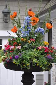 36 best container gardening images on pinterest pots plants and