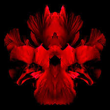 flamenco flowers 1 photograph by marianne dow
