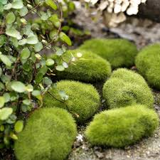Artificial Garden Rocks Garden Rocks Landscape Rocks Landscaping Garden Center The