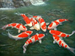 wallpaper ikan bergerak untuk pc gambar wallpaper 3d ikan bergerak gambar dp bbm