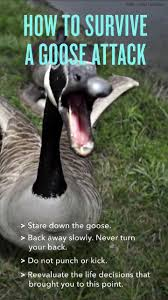 Goose Meme - nothing to see here meme by cakomemes memedroid