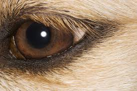 Blind In One Eye Depth Perception Night Vision Depth Perception What Dogs Actually See
