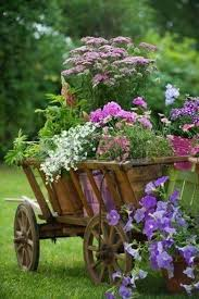 623 best flowers images on pinterest pretty flowers beautiful