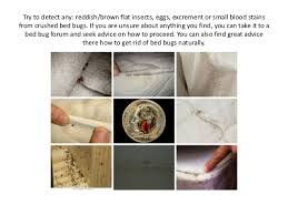 Can Bed Bugs Kill You How To Get Rid Of Bed Bugs Naturally Learn How To Kill Bed Bugs You U2026