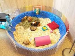 Guinea Pig Hutches And Runs For Sale Best 25 Guinea Pig Bedding Ideas On Pinterest Pig Ideas Guinea
