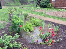 examples of native plants pwsa pittsburgh water and sewer authority