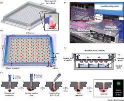 life is 3d boosting spheroid function for tissue engineering