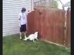 australian shepherd jumping fence dog jumps 6 foot tall fence youtube