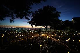 amazing field of lights installations9 u2013 fubiz media