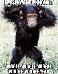 Sexy Monkey Meme - i m sexy and u know it wiggle wiggle wiggle monkey meme memes