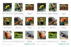 animals of south america for the montessori wall map quietbook