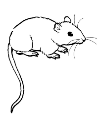 rat coloring pages 9 olegandreev me