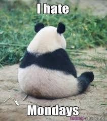 Funny Panda Memes - funny pictures of pandas google search pandas pinterest