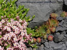 Xeriscape Landscaping Ideas Top Ten Myths About Xeriscaping What Is It And How Do I Do It