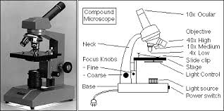 why is a light microscope called a compound microscope microscopy