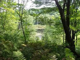 Vermont forest images Forestry facts learn about the forests of vermont JPG