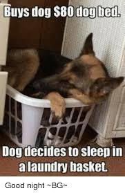 Dog In Bed Meme - buys dog 80 dog bed dog decides to sleep in a laundry basket good