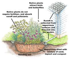 native plants for rain gardens install a rain garden u2014 watershed protection programs