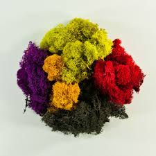 wholesale flowers and supplies moss preserved reindeer moss wholesale flowers and supplies