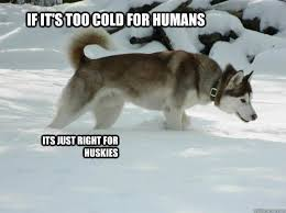 Cold Meme - if it s too cold for humans its just right for huskies husky
