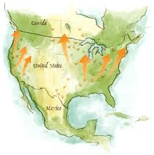 Monarch Migration Map The Story Of The Monarch Butterfly Monsanto