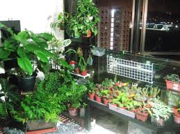 easy indoor herb garden kit ideas come home in decorations