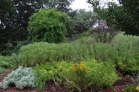 joan u0027s garden in kansas fine gardening