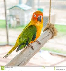 colorful parrot bird sitting on the perch royalty free stock