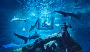 airbnb contest invites you to sleep with sharks for free money
