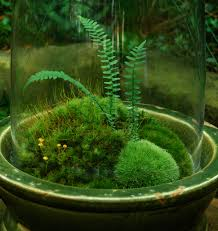 moss and moss moss terrariums or not moss and gardens