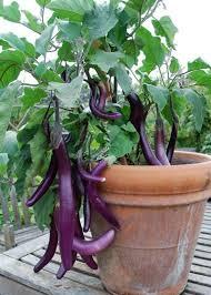 Edible Garden Ideas 10 Ideas For A Front Yard Edible Garden Your Neighbors Will