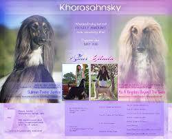 afghan hound kennel in australia news 2016 archives kharasahnsky afghan hounds