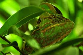 Reptile Heat Lamps Safety by 6 Ways To Warm Up Your Vivarium In Winter Keeping Exotic Pets