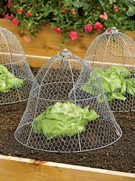 vegetable gardening tomato cages organic fertilizer more