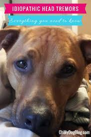 idiopathic head tremors oh my dog