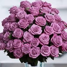 purple roses lavender purple roses in the air