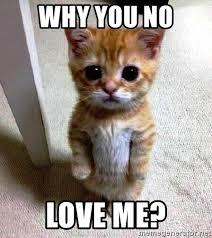 Why You No Love Me Meme - why you no love me begging catz meme generator