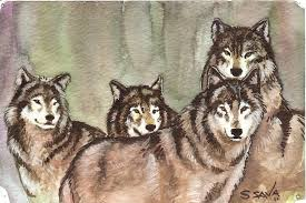 wolves watercolor sketch by ssava on deviantart