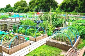 how to build a vegetable garden in backyard the garden inspirations