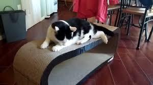 Cat Lounge Scratcher Pet4fun Cat Scratcher Lounge Review Youtube
