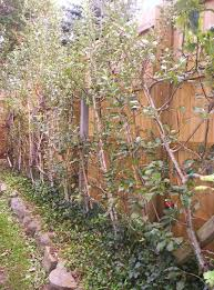 Interesting Small Backyard Orchard Pictures Design Inspiration - Backyard orchard design