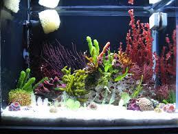 Beautiful Home Fish Tanks by Beautiful Macro Aquascape W Dwarf Seahorses Home Sweet Home