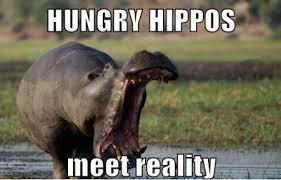 Hippo Memes - hungry hippo memes image memes at relatably com