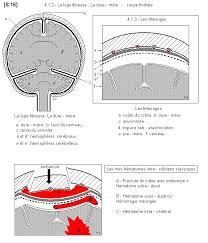 si e des motions dans le cerveau 76 best cerveau images on psychology the brain and