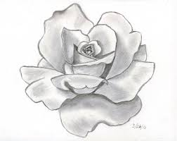 pencil drawing for flowers best 25 flower sketches ideas on