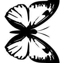 coloring pictures of small butterflies small butterfly coloring pages hellokids com