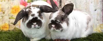 san diego house rabbit society