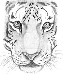 how to draw a tiger by search animals